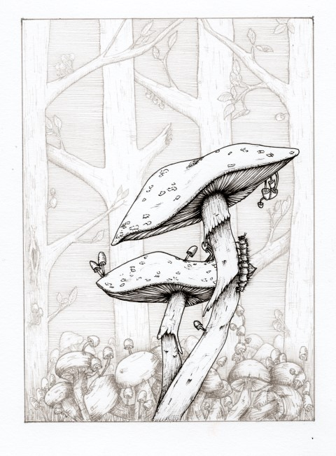 postcard_mushrooms 2400 (Klein)